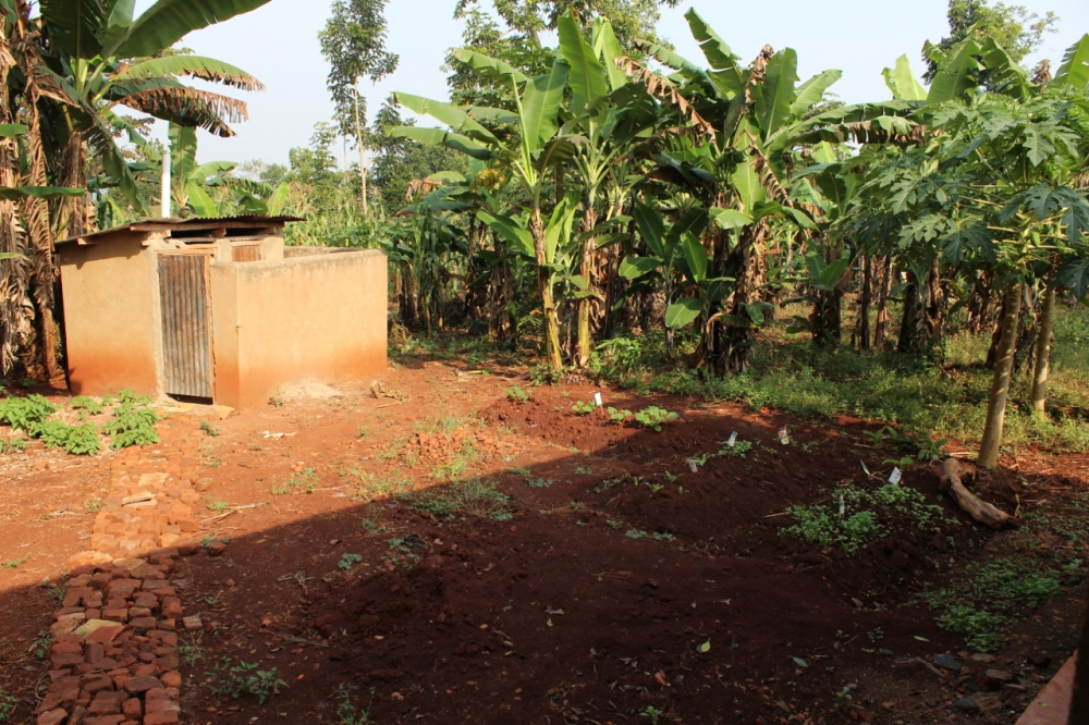 View of latrine and nursery bed behind the house.